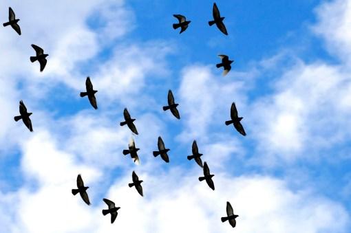20123_FlyingBirds