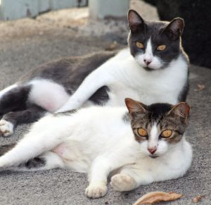 Feral_cats