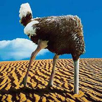 Head in sand ostrich