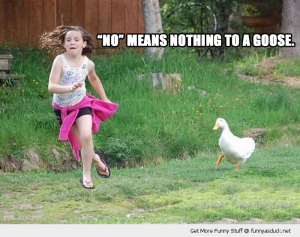 funny-duck-chasing-little-girl-no-means-nothing-goose-angry-pics