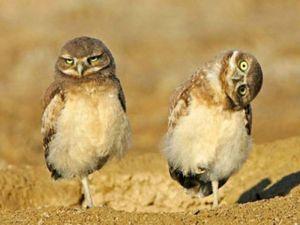 twofunnybirds